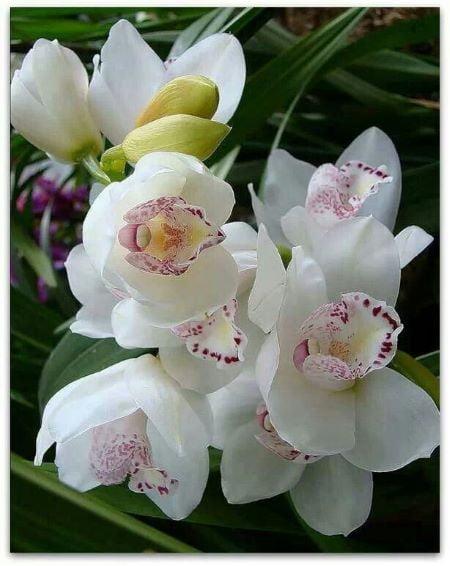 Lumanare parfumata orhidee alba borcan reutilizabil
